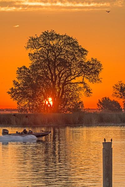 Tree and Mokelumne River at Sunrise. Isleton with speed boat