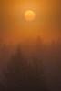 Trees with Sun and Fog, Idaho