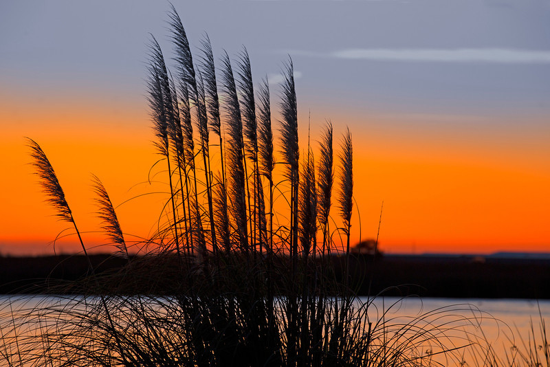Sunrise on the Mokelumne River across from Delta Shores RV Park near Isleton, CA.