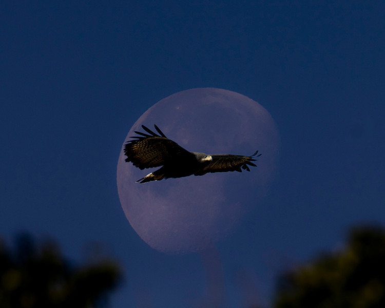 A morning moonset with Black Hawk. (constructed, but photos taken within minutes of each other in Arizona.) April 2011