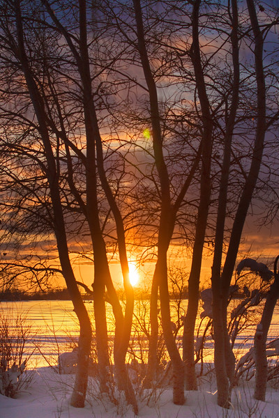 Sun setting through Aspens