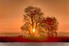 Tree on Lower Molukumne River at Sunrise