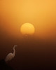 Egret and Sunrise