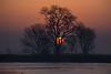 Mokelumne River Tree at Sunrise