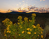 Sunrise over the Yellowstone Plateau with Goldenrod wildflowers in the foreground. August 8, 2011. Idaho