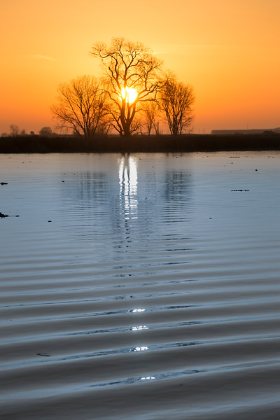 Sunrise over Mokelumne River and tree