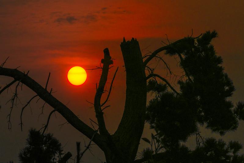 Sunrise through Smoke, Monterey, CA