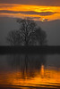 Sun is partially obscured by clouds in the East as it rises over tree on the Lower Mokelumne River near Isleton, California. Dec 27, 2009