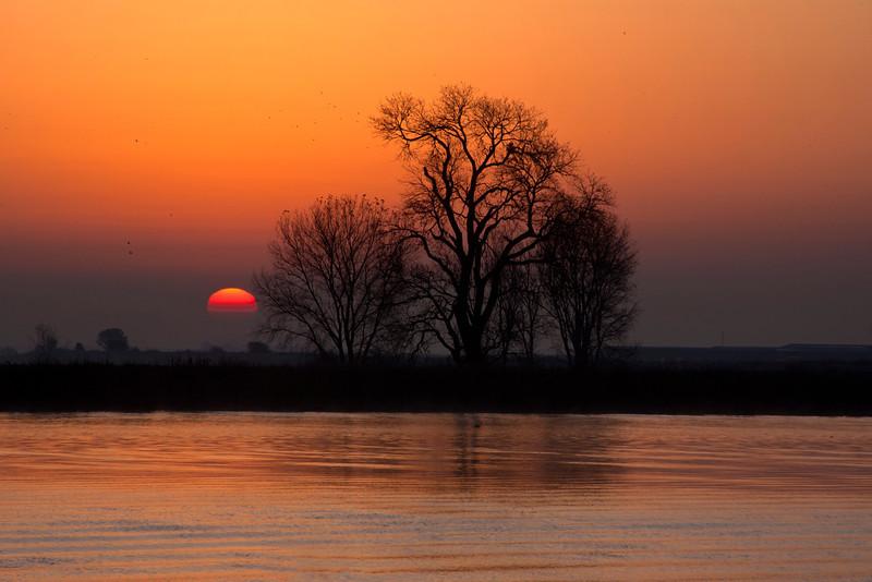 Sacramento Delta Sunrise and Tree 2