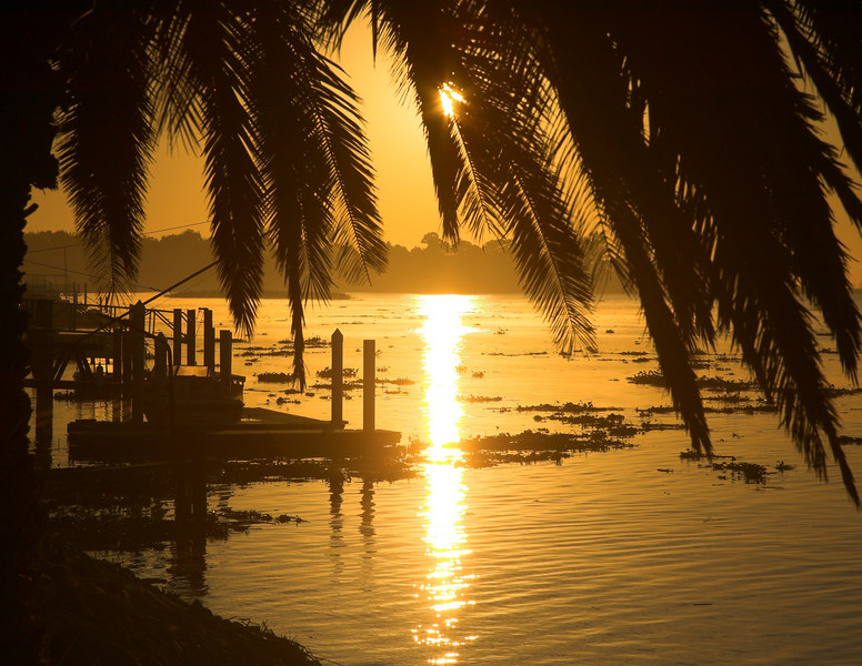 Delta Bay sunrise and palm tree near Isleton, CA Oct 2006