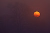 The sun as it actually appeared through dense fog on the lower Mokelumne River in the Sacramento Delta on Dec 11, 2012.