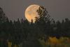 Harvest moon setting at RedRock RV Park, Idaho