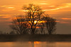 Sunrise and Tree