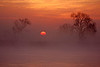 Early morning sunrise through fog over the lower Mokelumne River in the Sacramento River Delta region, near Isleton, CA. December 7 2011.