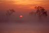Early morning sunrise through fog over the lower Mokelumne River in the Sacramento River Delta region, near Isleton, CA. December 7 2011.