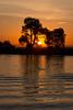 Molukumne River Sunrise and Tree