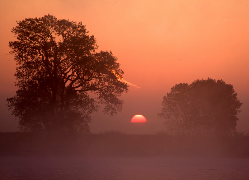 Two trees at sunrise on the banks of the lower Mokelumne River in the Sacramento River Delta region, near Isleton, CA.
