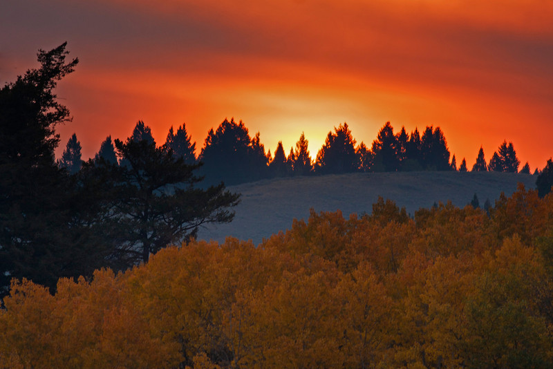 Sun rising over Bootjack Hill near Island Park, Idaho with fall colored aspens. Sep 2012
