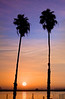 Sunrise and Palm trees over the lower Mokelumne River in the Sacramento River Delta region, near Isleton, CA. Oct 2008