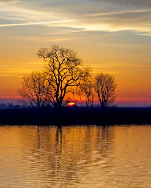 Trees at sunrise on the banks of the lower Mokelumne River in the Sacramento River Delta region, near Isleton, CA. December 6 2011.