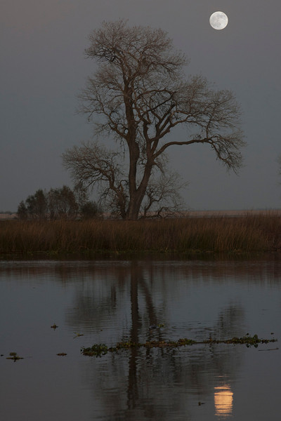 Full moon rising over the lower Mokelumne River in the Sacramento River Delta region, near Isleton, CA. December 9 2011.  This moon will eclipse fully the next morning.