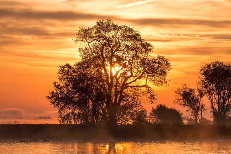 Sun through Tree and Mokelumne River at Sunrise. Isleton