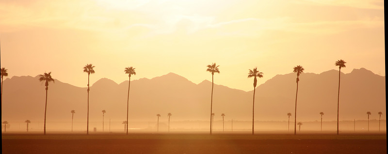 Northeast Yuma, Arizona and Palm Trees in Morning light. March 2007