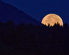 Moon setting between a valley in the Centennial Mountains of Montana and Idaho with trees. Sept 3, 2009