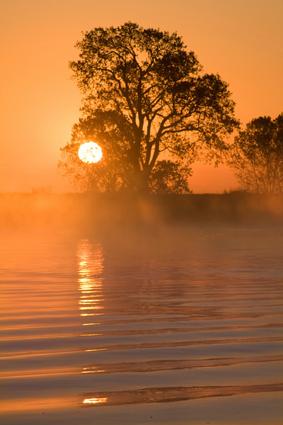 Tree at sunrise on the banks of the lower Mokelumne River in the Sacramento River Delta region, near Isleton, CA.  Wake of a boat adds depth.