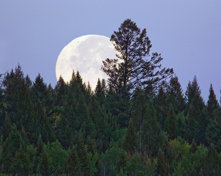 Moonset over Montana taken from RedRock RV park near Island Park, Idaho. Sept 15, 2008.