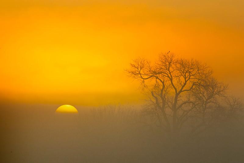 Sunrise and fog along the lower Mokelumne River at Sunrise in the Sacramento River Delta region, near Isleton, CA. Jan 2, 2013