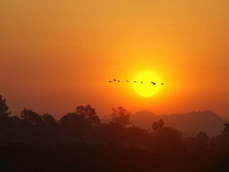 Sunset with Geese Northern California (near Marysville).