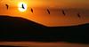 Sunrise and Geese, Idaho