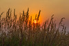Rising sun through wheat grass along Red Rock Road in Idaho. August 16, 2013