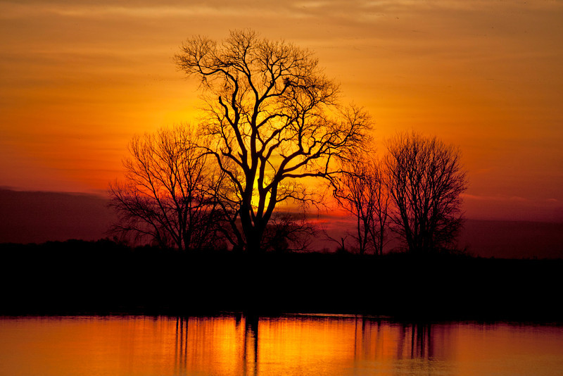Sunrise behind silhouetted tree on the lower Mokelumne River in the Sacramento Delta. Jan 18, 2012. Copyright James Perdue
