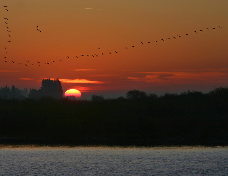 Early morning Sunrise at Delta Bay, near Isleton, California. Thousands of Geese fly northeast every morning across this bay.