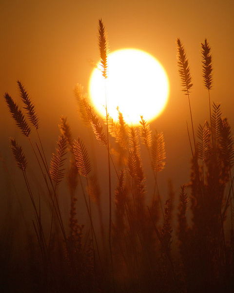 Sunrise through smoke and wheat at RedRock RV Park, eastern Idaho, 2006.