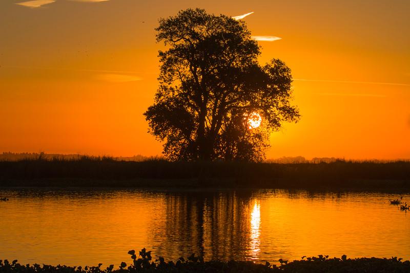 Lower Mokelumne River , trees at sunrise.