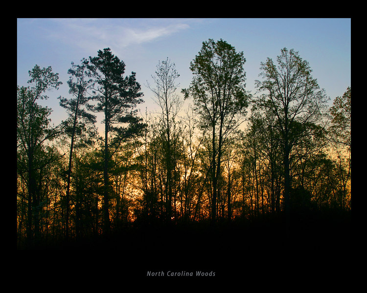 Sunrise in the North Carolina Woods near Salisbury, NC.