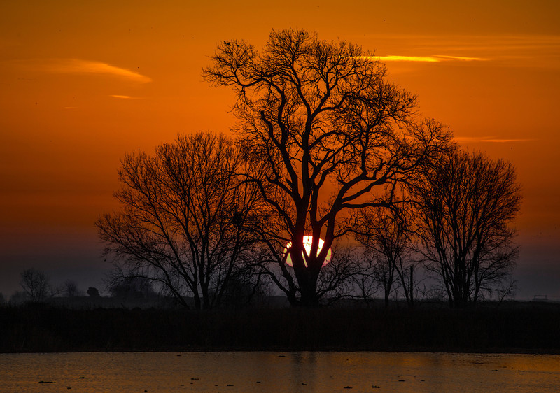 Tree at Sunrise on the Mokelumne River in the Sacramento Delta