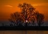 Tree at Sunrise on the Mokelumne River in the Sacramento Delta