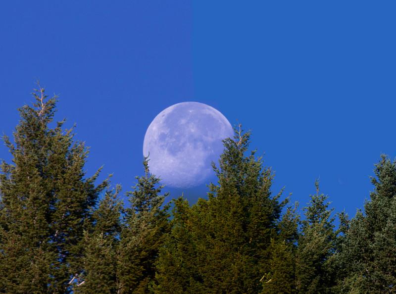Morning Moonset over trees along Centennial range in Idaho/Montana border. July 29, 2010.