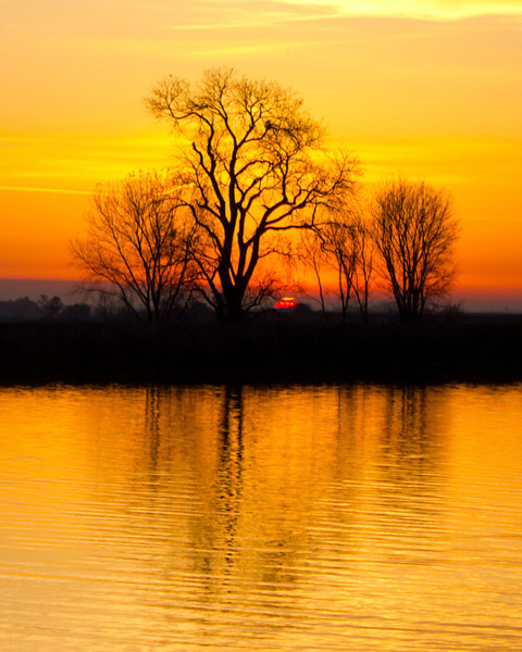 Silhouetted trees at sunrise on the banks of the lower Mokelumne River in the Sacramento River Delta region, near Isleton, CA. December 6 2011.