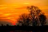 Sunrise and Tree, Isleton, CA