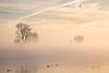 Fog and tree on Mokelumne River.