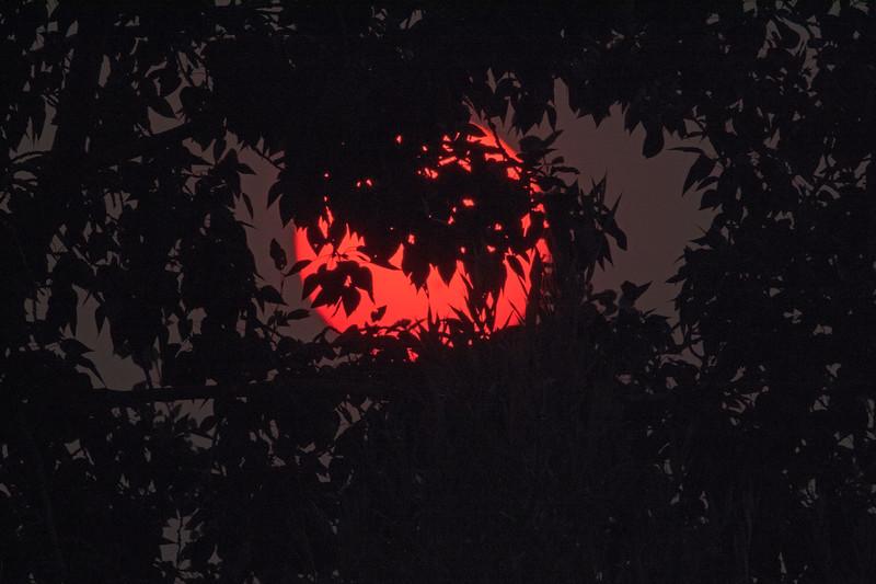 Sun setting behind tree in heavy smoke