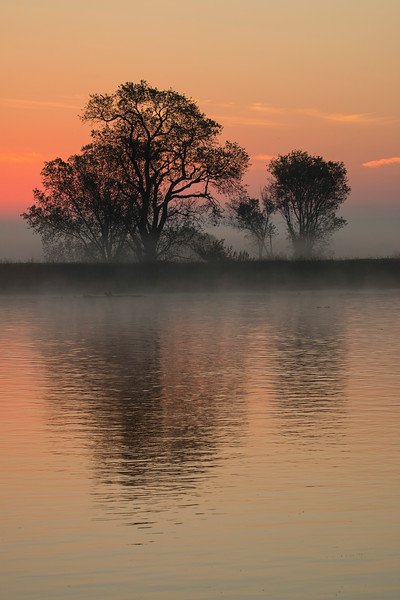 Sunrise and tree over Mokelumne Riverf