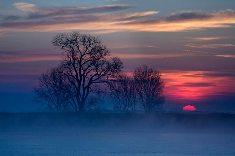 Lower Mokelumne River Sunrise and Tree