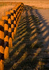 Something so prosaic as a fence at sunset makes an interesting pattern, in Island Park, Idaho. 2008.