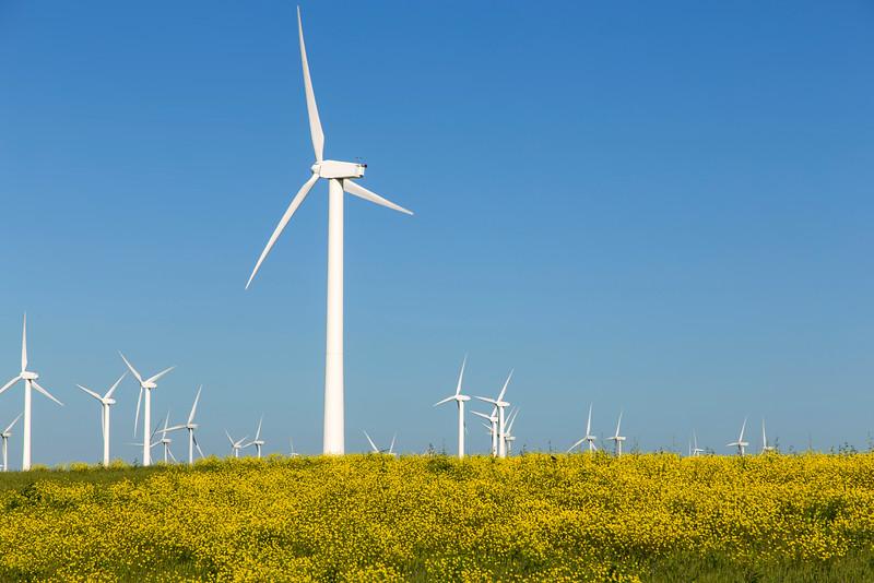 Montezuma Hills Wind Farm and flowers, Rio Vista, CA
